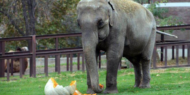 Pravo iz Tempo Ade danas je u Zoovrt stigao poklon za slonicu, Gradski Magazin