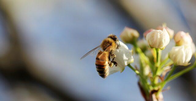 Svetski dan zaštite životne sredine u znaku borbe za pčele, Gradski Magazin