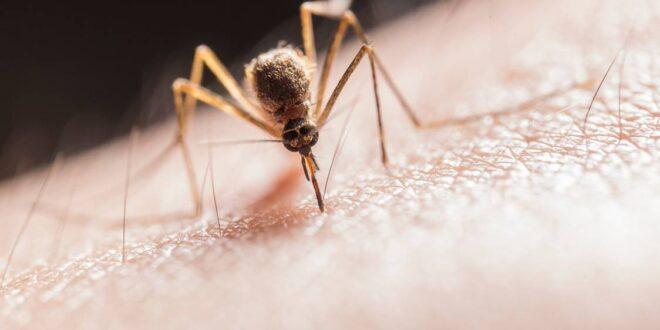 Suzbijanje komaraca u Beogradu i iz vazduha: Prijavite gde ih ima najviše, Gradski Magazin