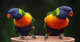 Zoo, Papagaji uklonjeni iz zoo-vrta: Međusobno podsticali jedni druge da psuju, Gradski Magazin