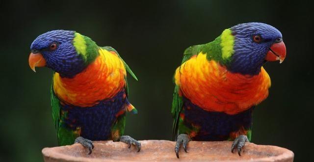 Papagaji uklonjeni iz zoo-vrta: Međusobno podsticali jedni druge da psuju