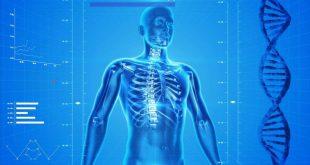 Ovu su najčešće zablude o ljudskom telu, Gradski Magazin